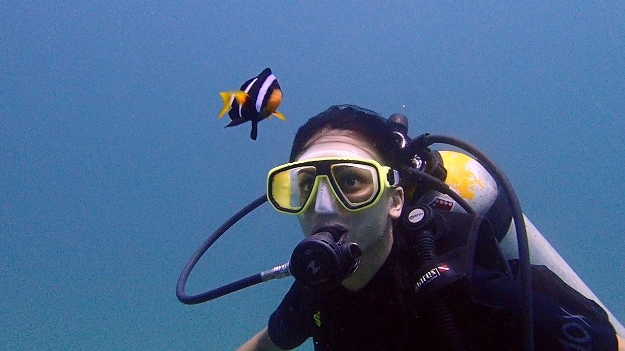 Diving at Phi-Phi with sharks and turtles