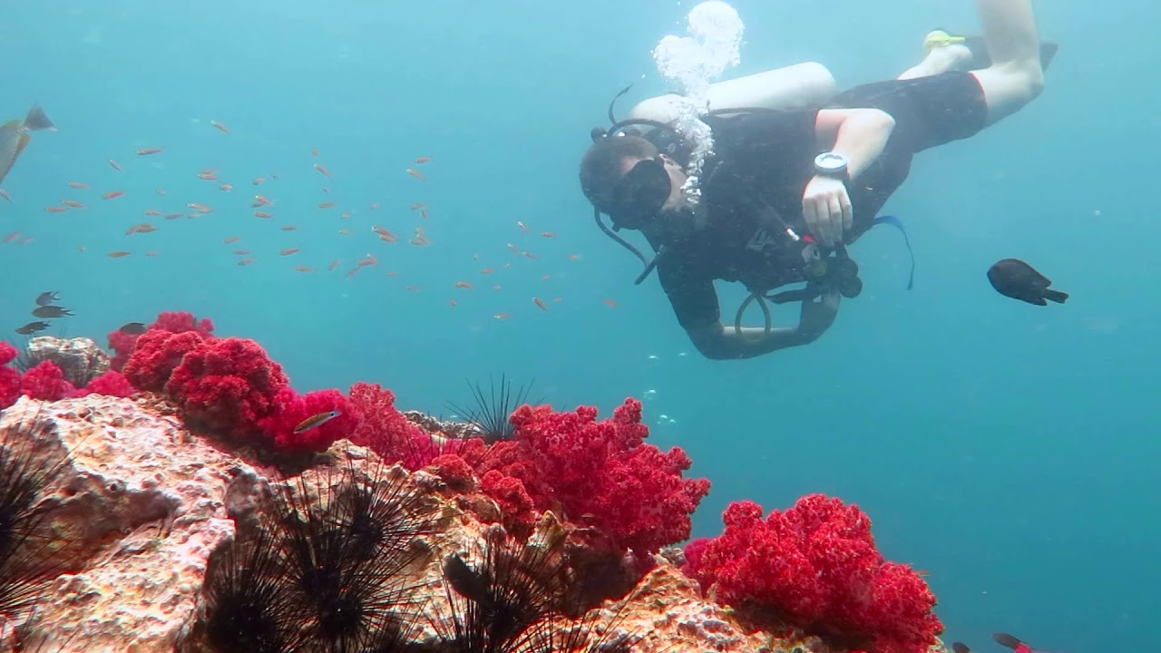 Diving in Andaman Sea around Phuket, Thailand.